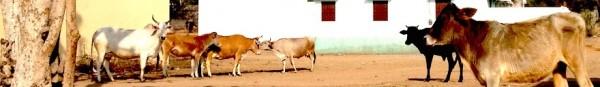 Rajasthan_Beitrag