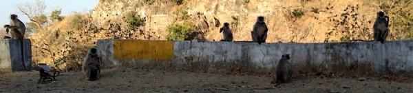 Udaipur_Beitrag
